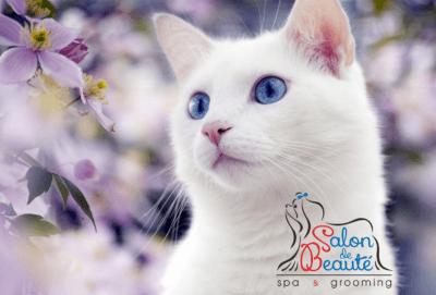 """Акция """"Белоснежка"""" - Скидка 50% на мытье и отбеливание белых собак и кошек!!!"""