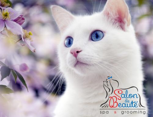 """Акция """"Белоснежка"""" – Скидка 50% на мытье и отбеливание белых собак и кошек!!!"""