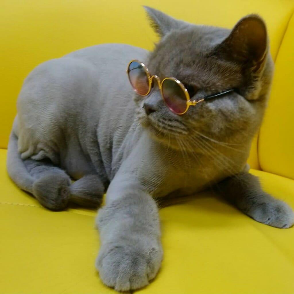 Груминг кошек