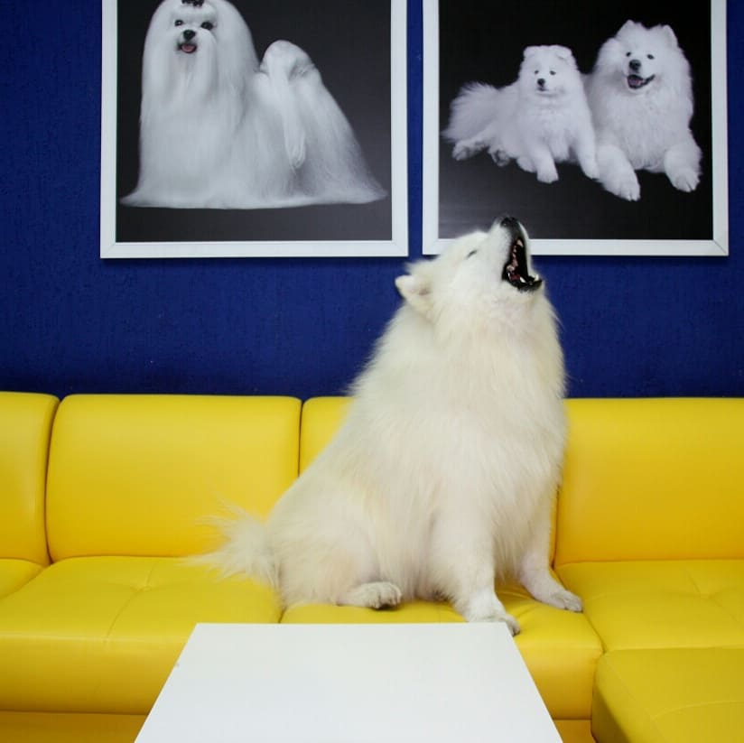 """Груминг салон для животных """"Salon De Beaute"""""""